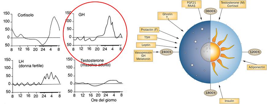 ritmi circadiani GH