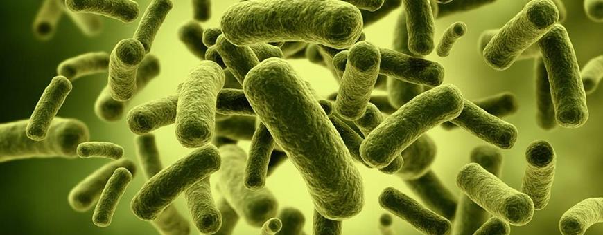Prebiotici e probiotici