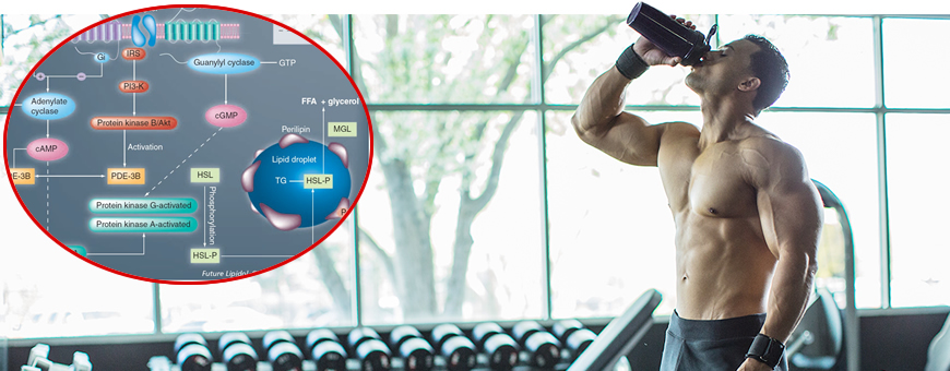 carboidrati post workout