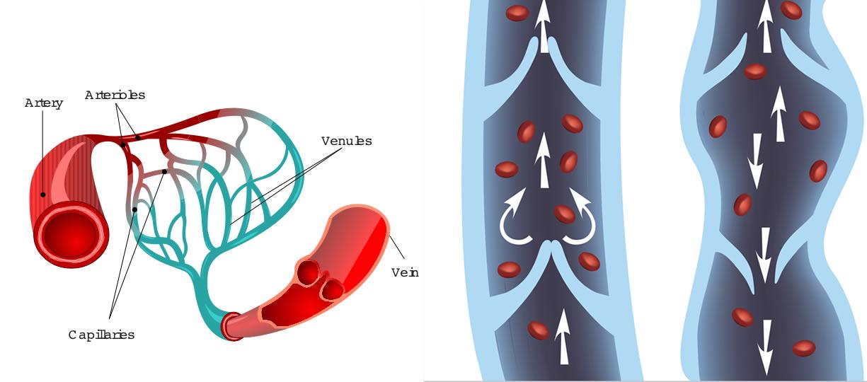 microcircolo vene e capillari