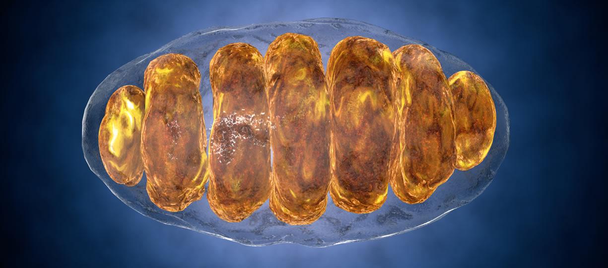 sensibilità insulinica e mitocondri