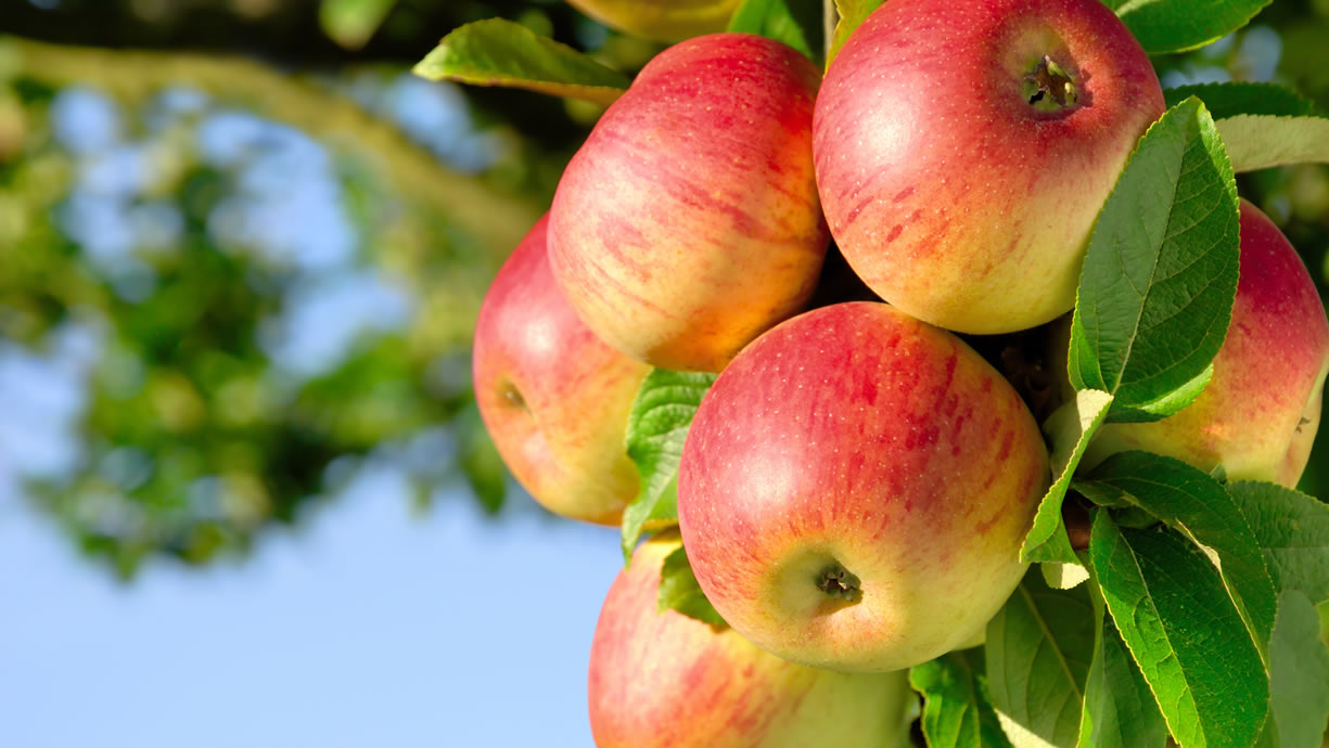 valori nutrizionali mela