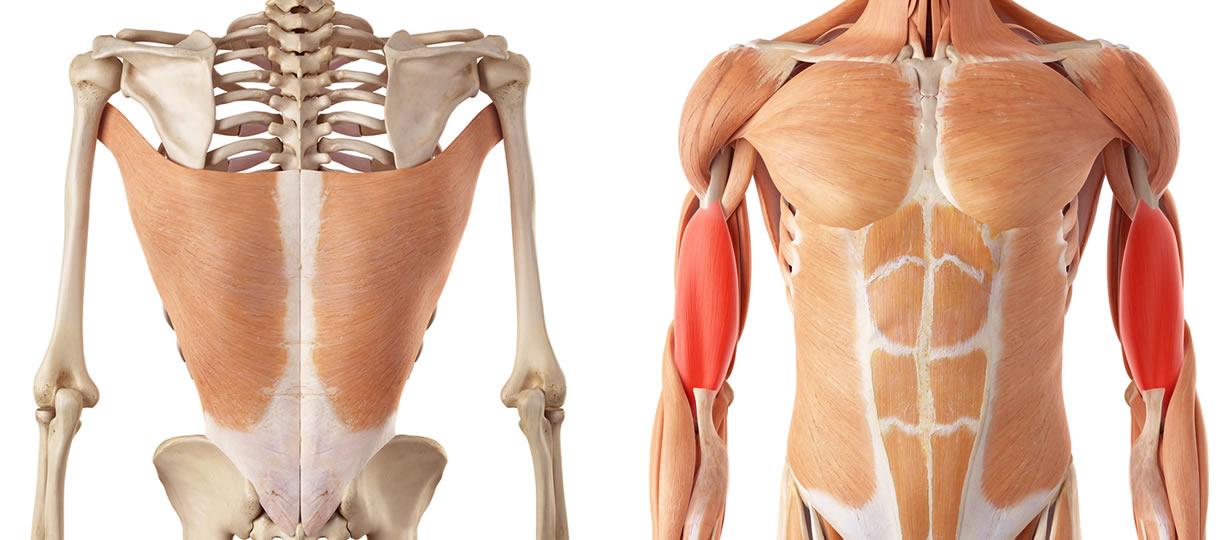 muscoli lat machine presa inversa