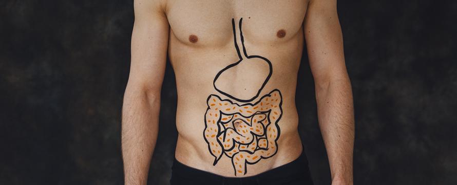 glutammina ed intestino
