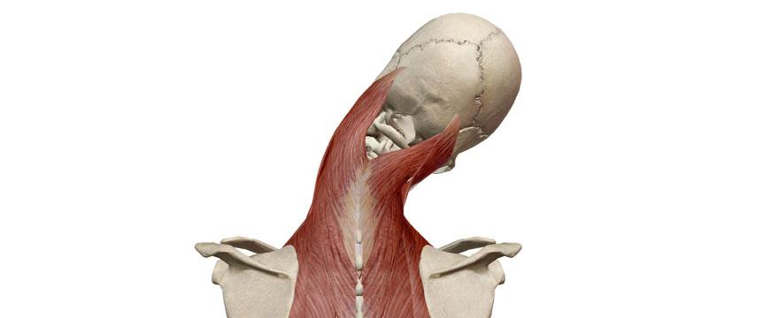 inclinazione laterale cervicale