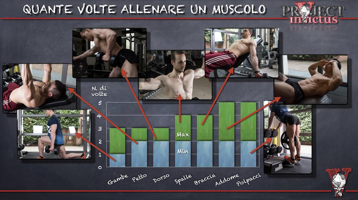 quante volte allenare un muscolo a settimana