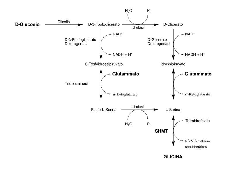 sintesi della glicina