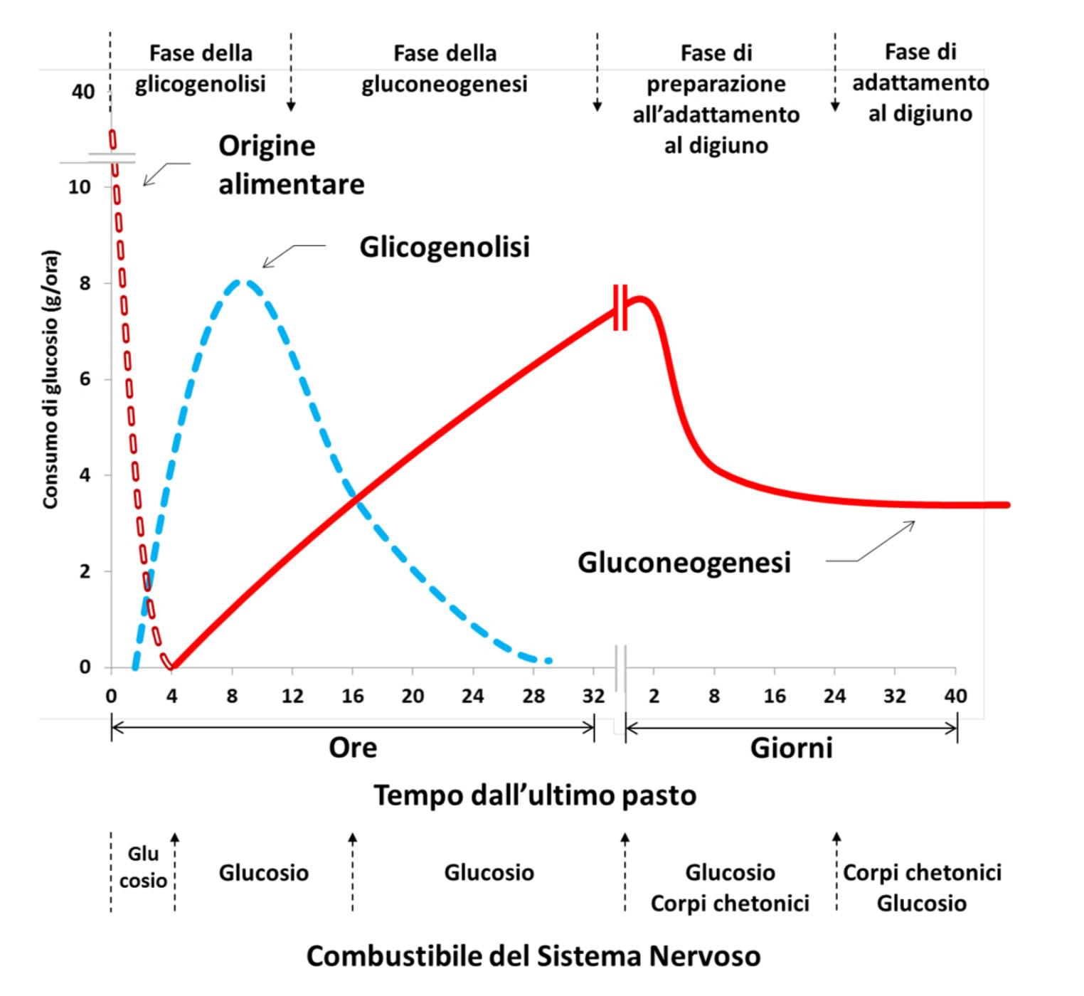 consumo di glucosio dopo il pasto