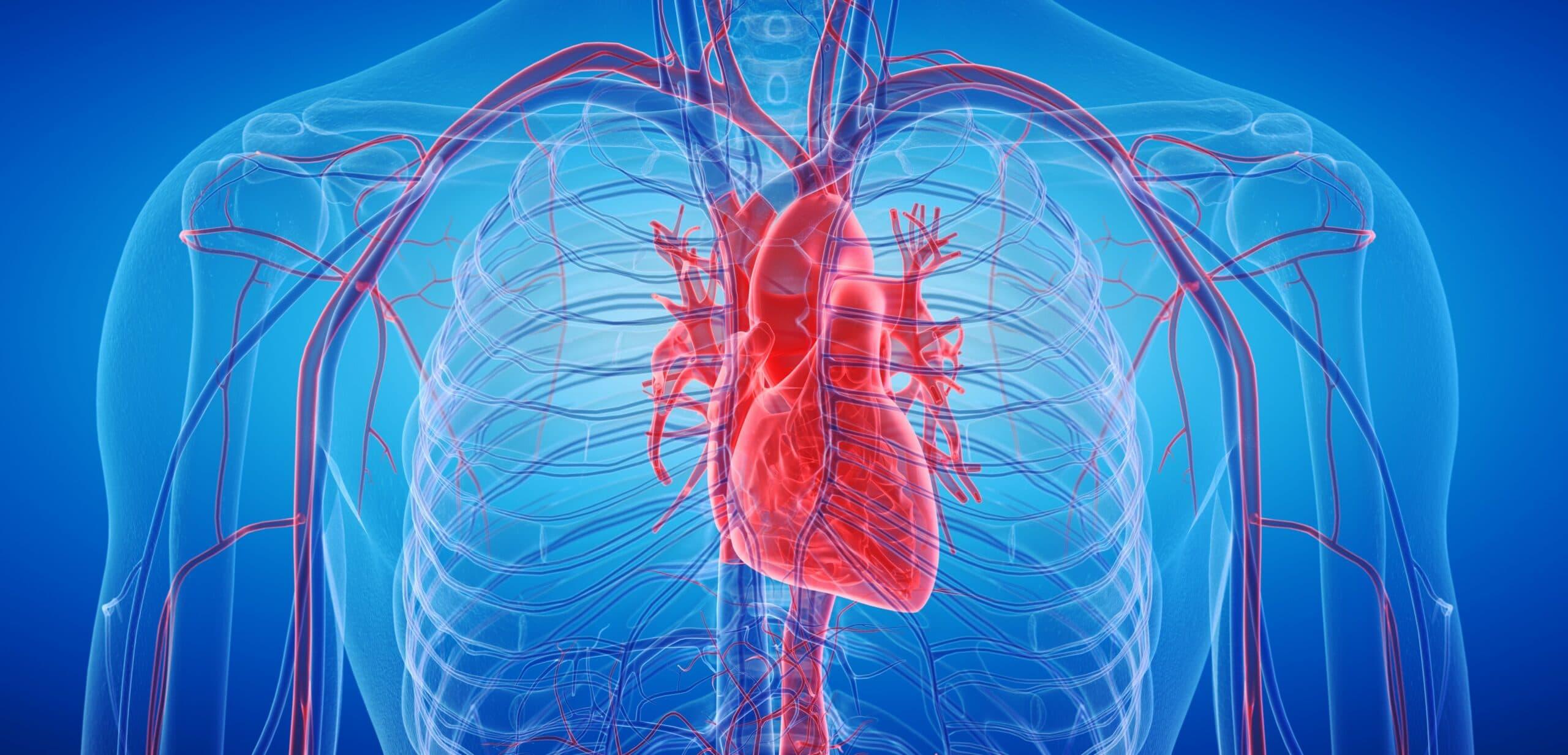 taurina effetti sul cuore