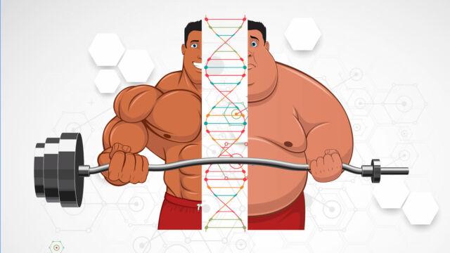 quanto conta la genetica in palestra