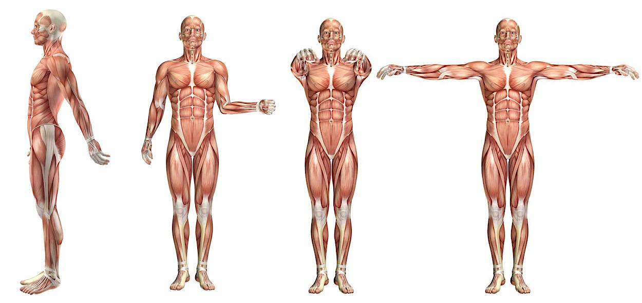 Movimenti deltoide posteriore