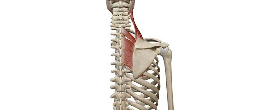 rotazione caudale