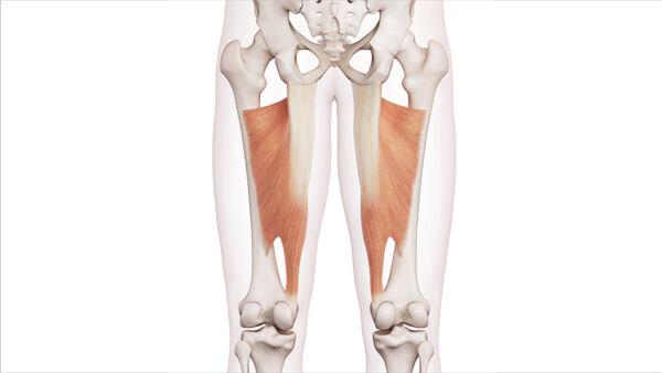 dolore zona pelvica destra lungo la gamba