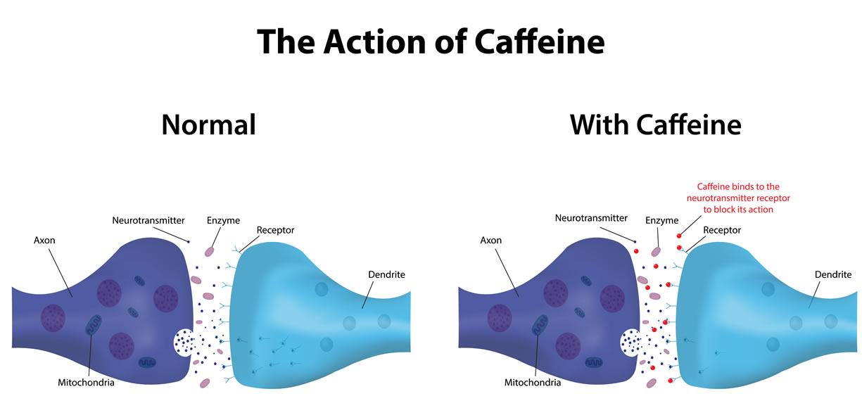 azione caffeina