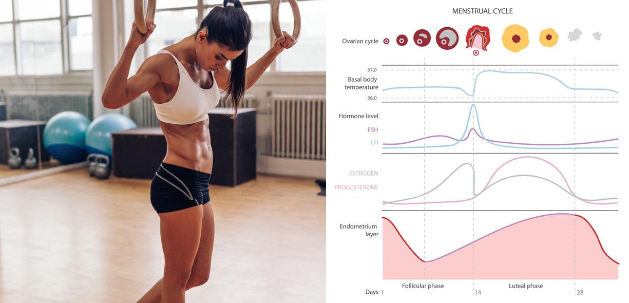 donna e ciclo mestruale
