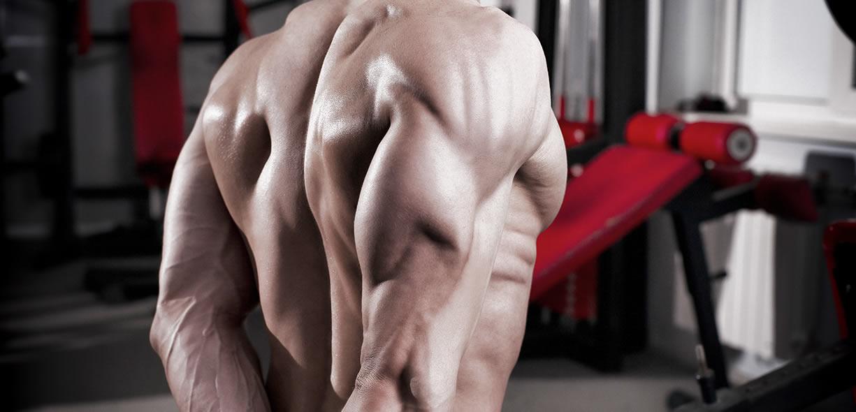 muscolo tricipite