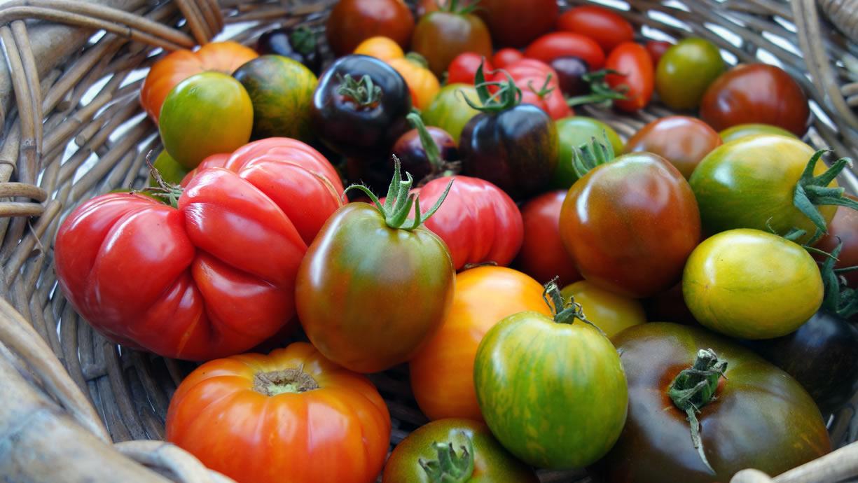 pomodori proprietà