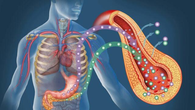 insulina e glucagone