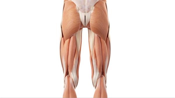 dolore nella parte superiore della gamba e dellanca