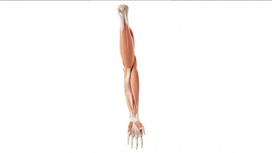 Muscoli Della Schiena Project Invictus