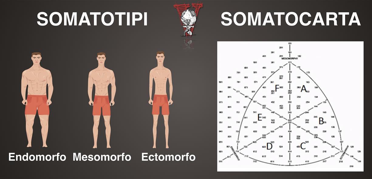 Somatotipo e somatocarta