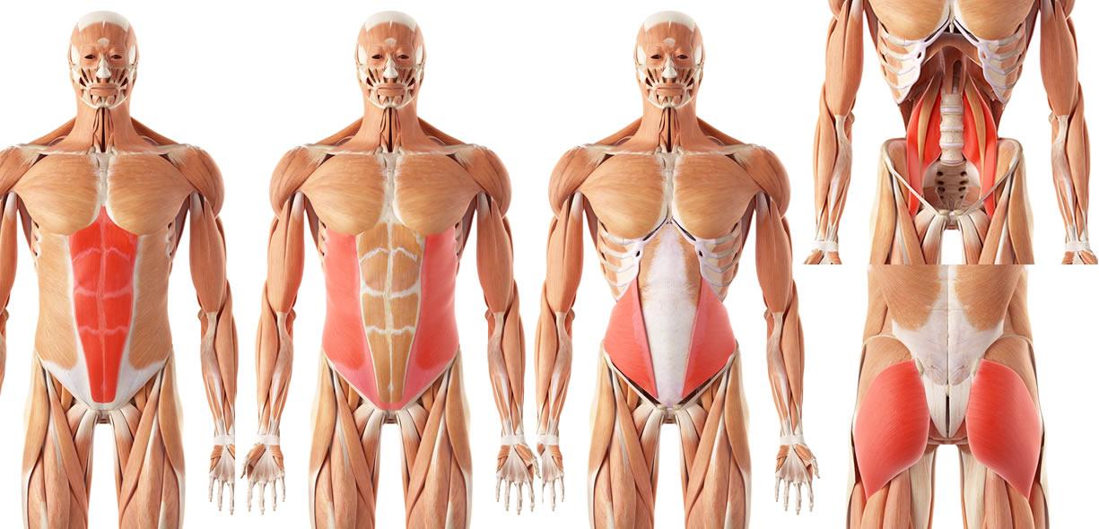 muscoli plank