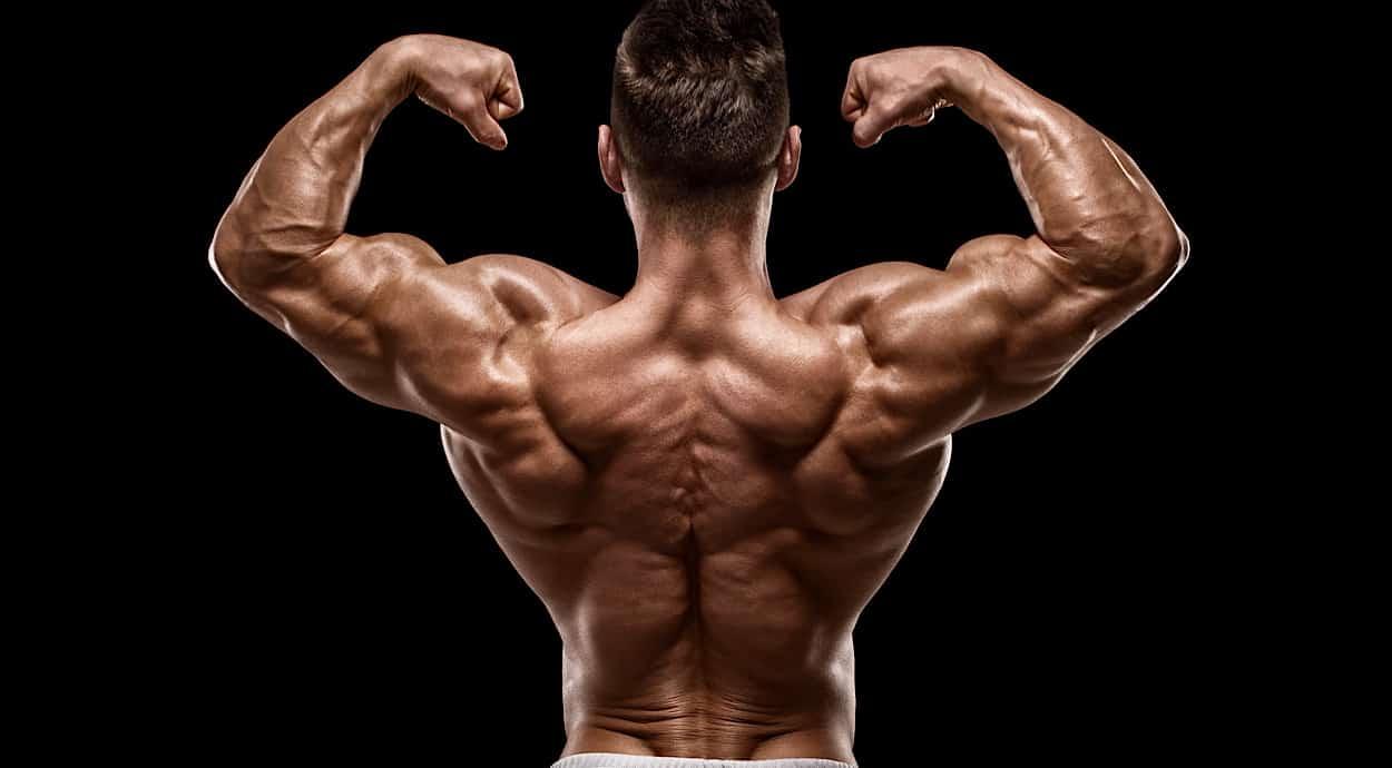 muscoli schiena anatomia e funzioni