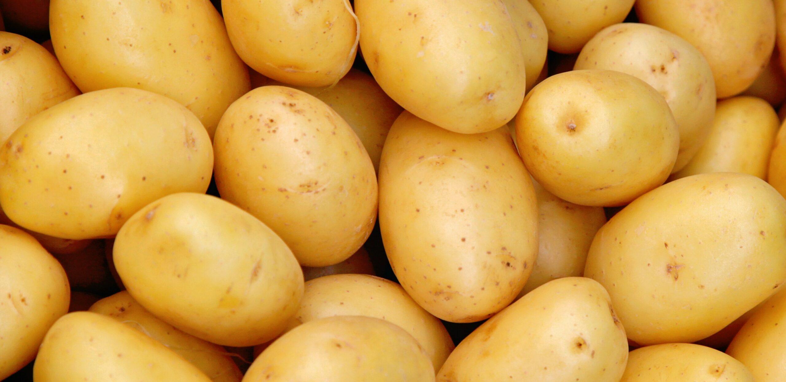 patate solanina