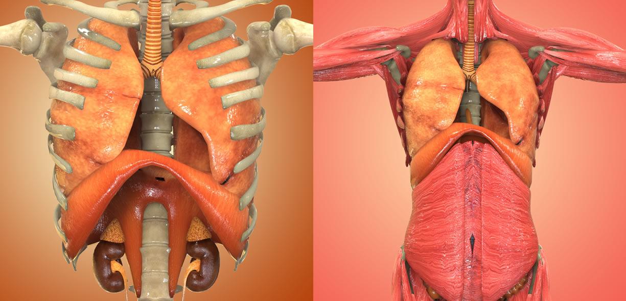 diaframma e centro frenico