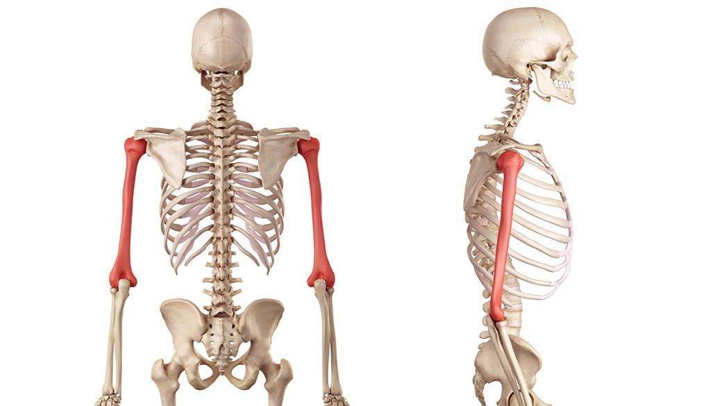 immagine omero osso