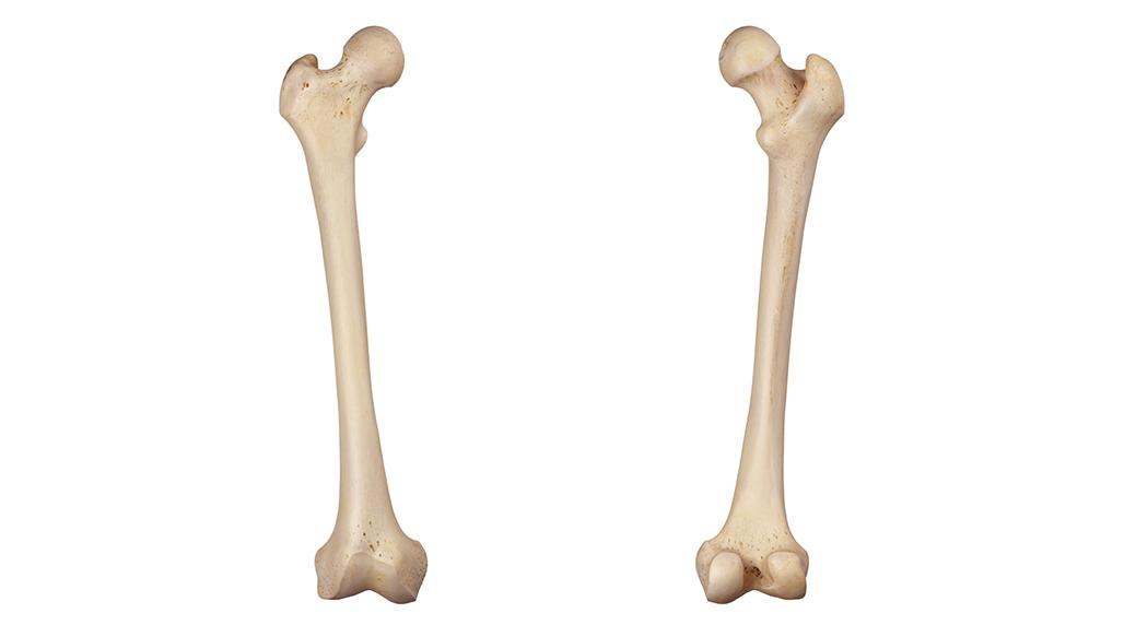 Immagine osso femorale