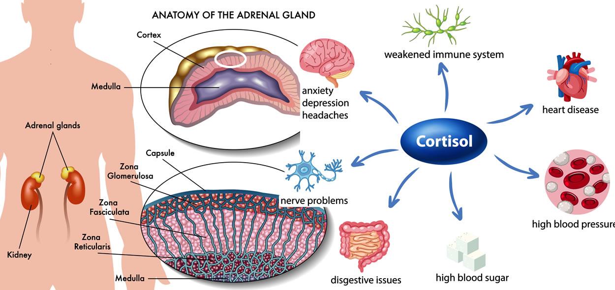 effetti del cortisolo