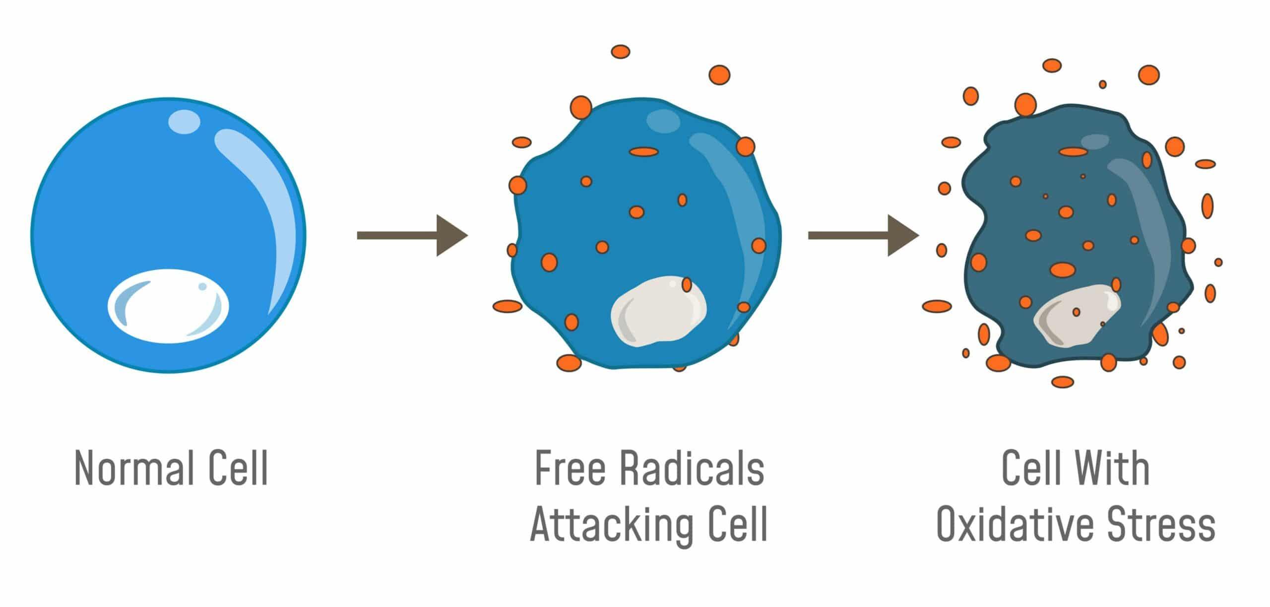radicali liberi fanno male