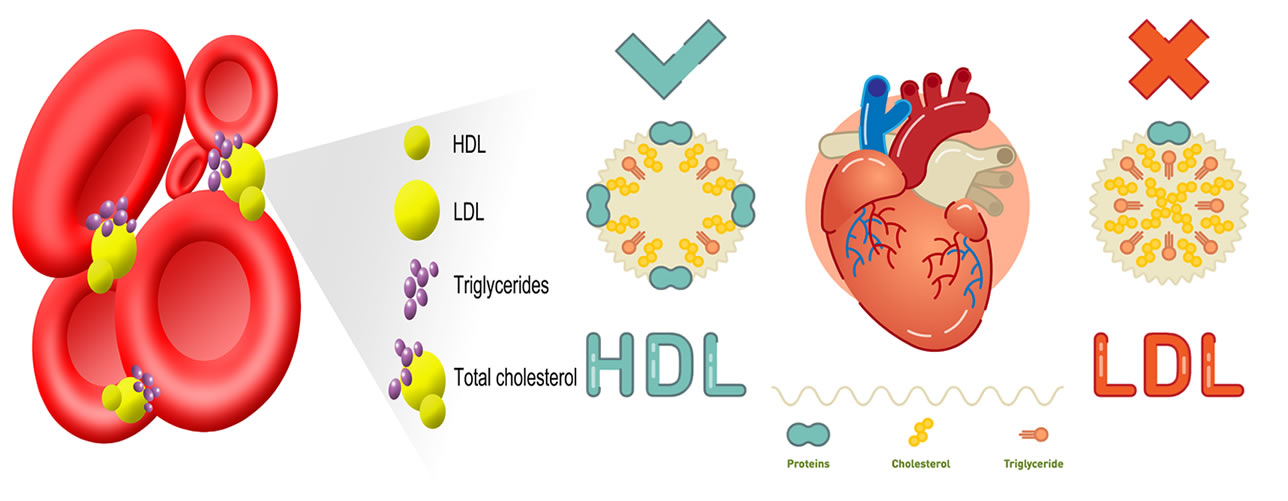colesterolo ldl hdl