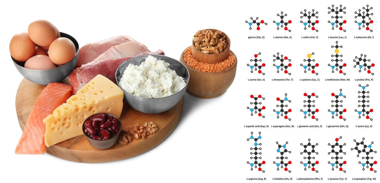 aminoacidi alimentazione