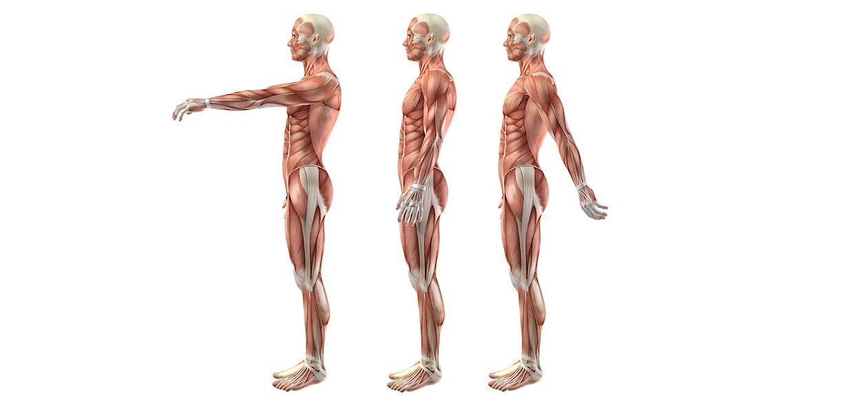Flesso-estensione spalla