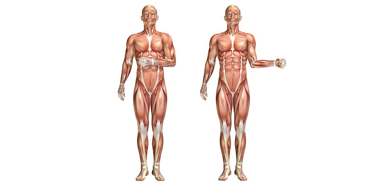 Rotazioni di spalla