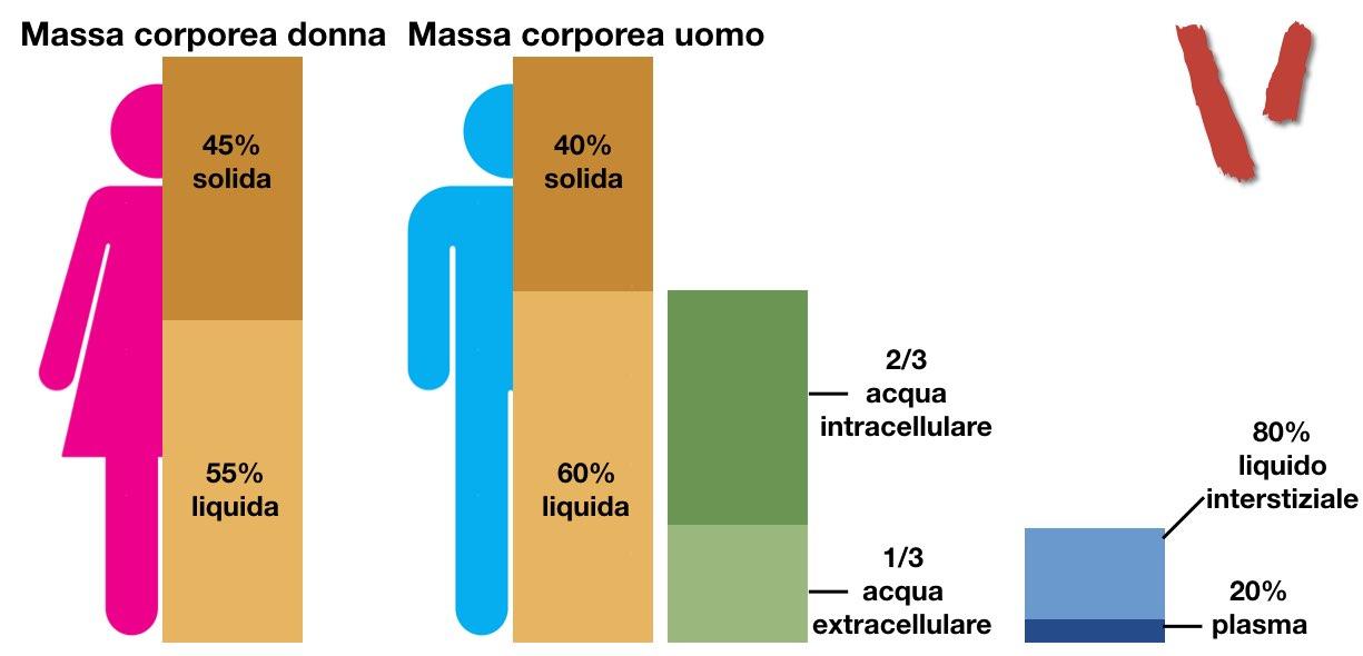 Massa corporea ripartizione acqua intracellulare extracellulare