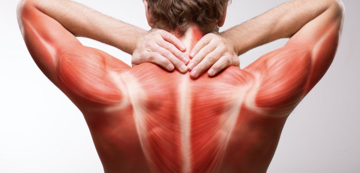 Come evitare il catabolismo muscolare
