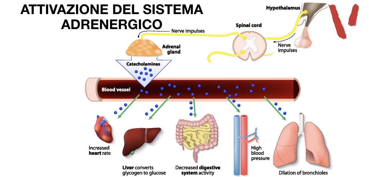 attivazione sistema adrenergico