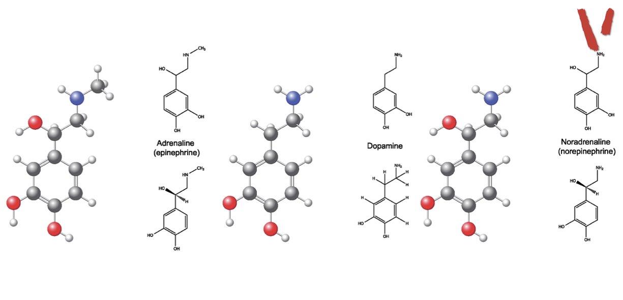 biochimica catecolamine