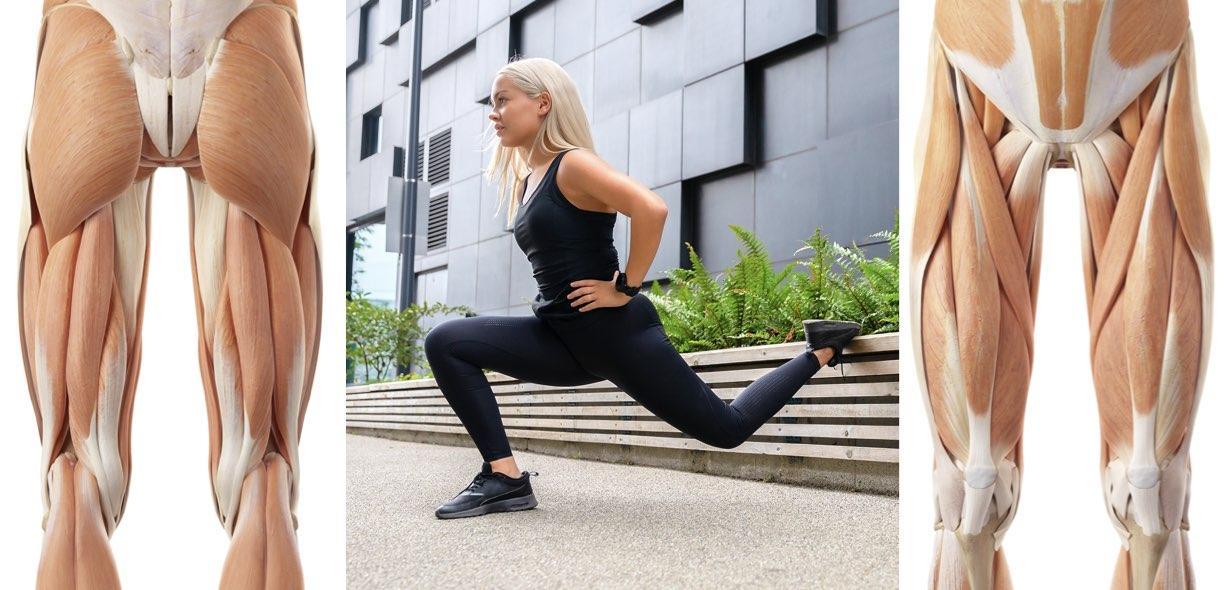 muscoli coinvolti squat bulgaro