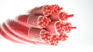 Relazione tra la miostatina e l'ipertrofia muscolare