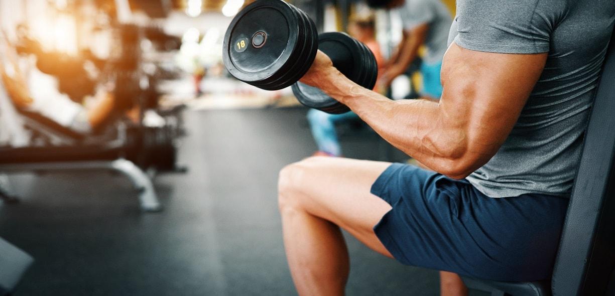 Effetti della miostatina sul muscolo scheletrico