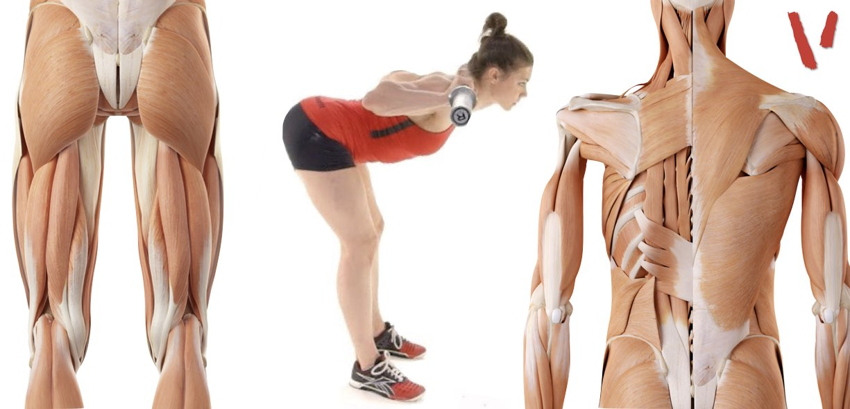 Buenos dias músculos involucrados