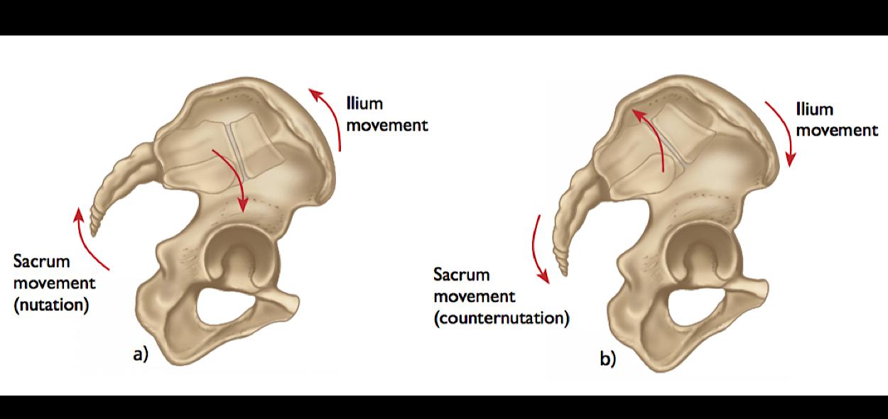 Movimenti sacroiliaca