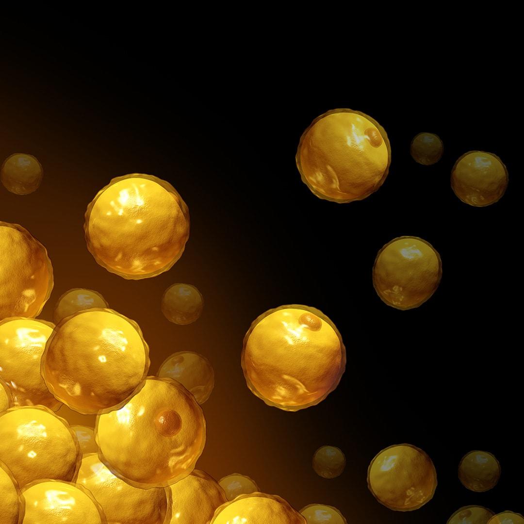 grasso ostinato cellule adipose