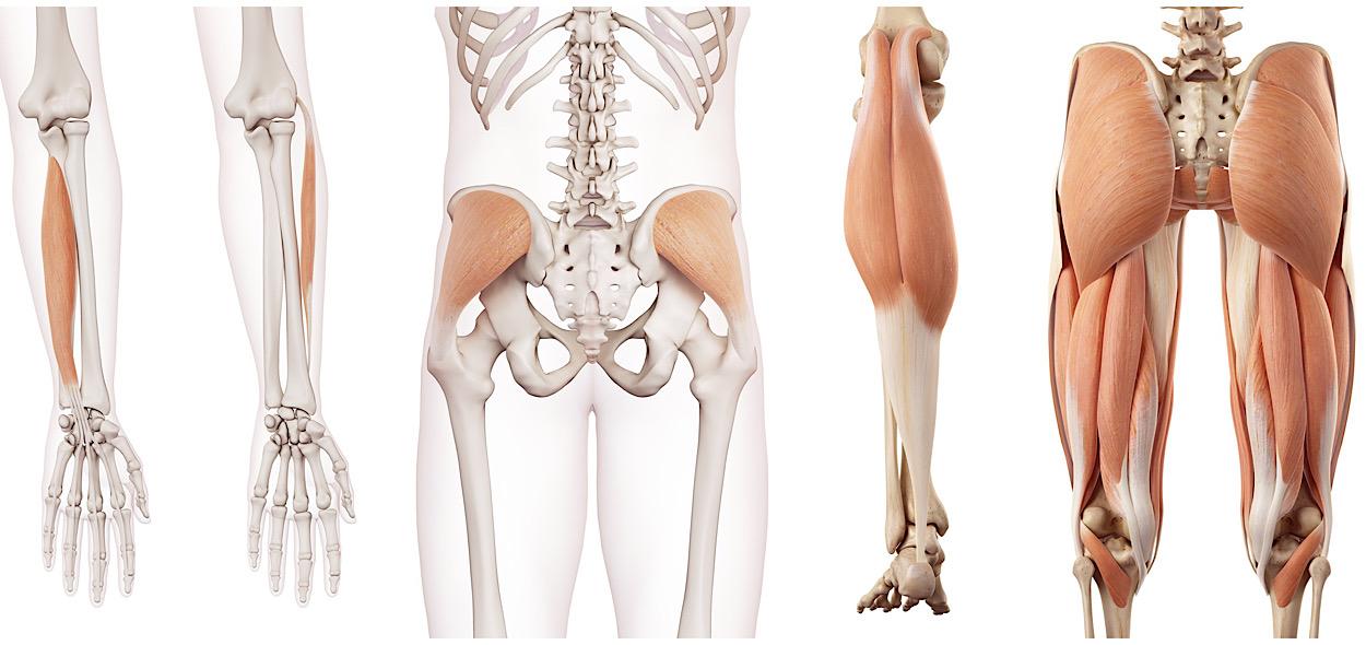 Tendinopatie muscoli