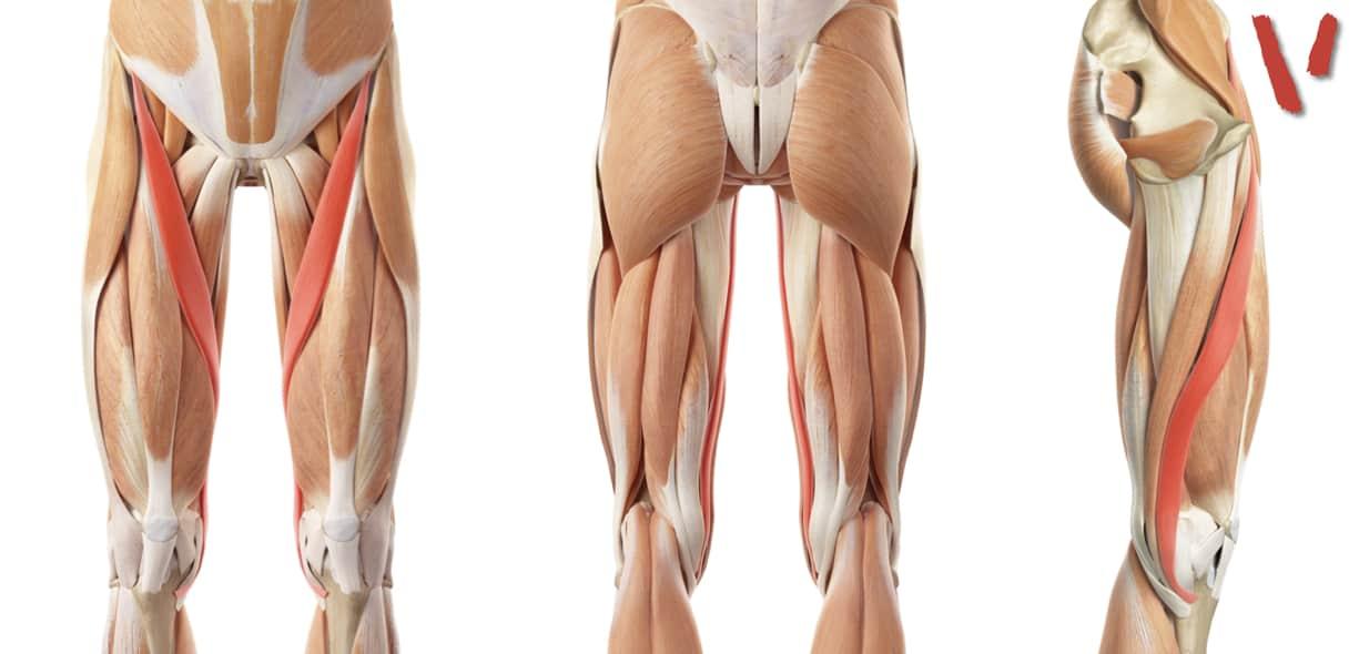 Muscolo sartorio
