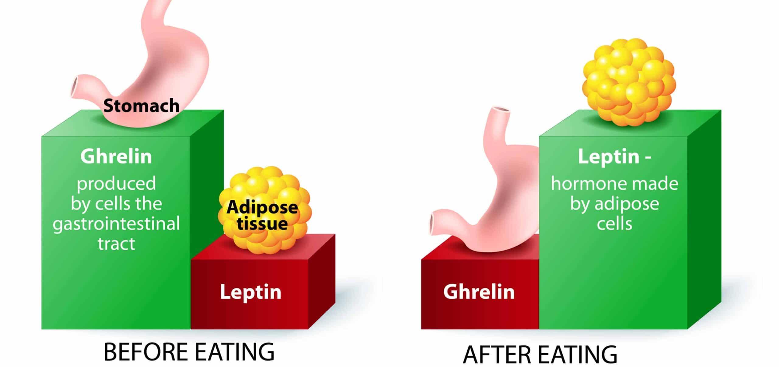 sazietà e leptina per dimagrire